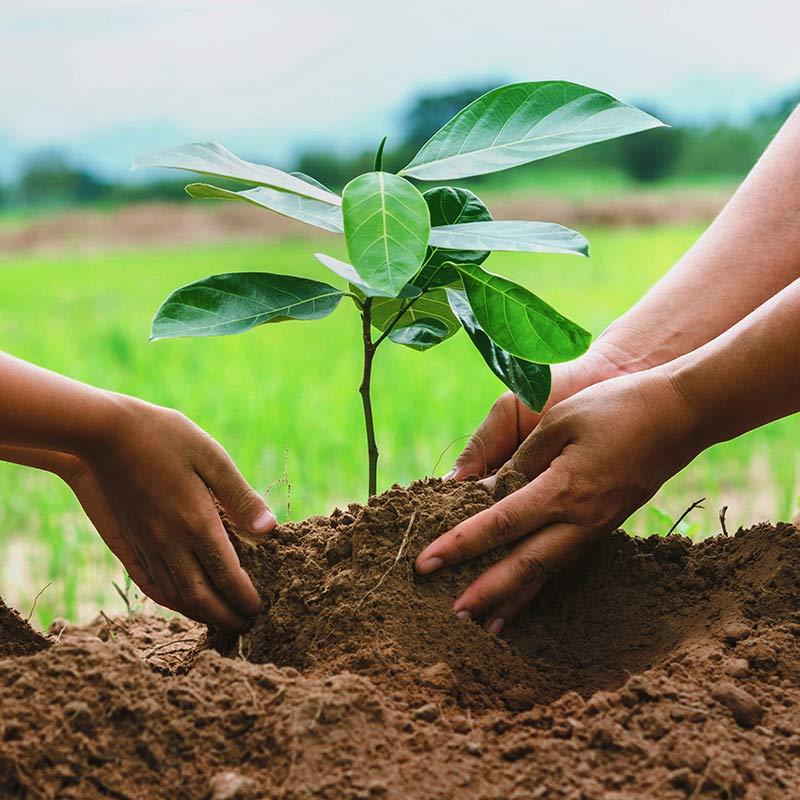 Engagement pour la planète - Goodmorningoffice